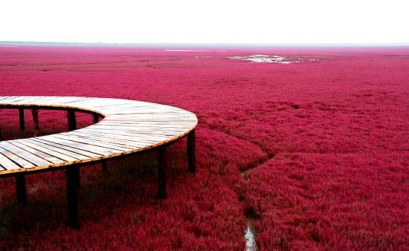 Panjin Red Beach , China