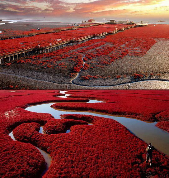 Panjin Red Beach , China